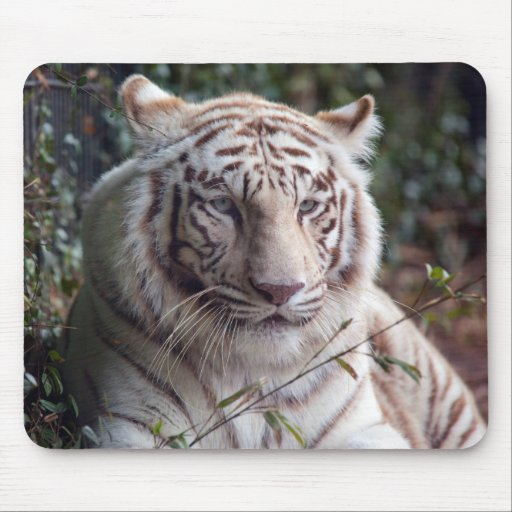 White Bengal Tiger Mouse Pads