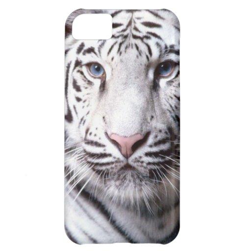 White Bengal Tiger Photography iPhone 5C Cover