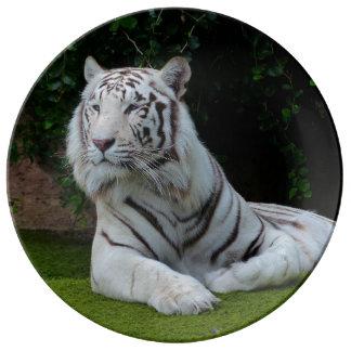 White Bengal Tiger Porcelain Plates