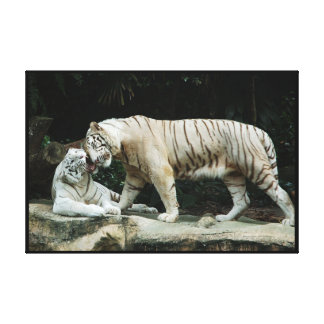 White Bengal Tiger Wrapped Stretched Canvas Prints