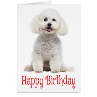 White Bichon Frise Puppy Dog Red Happy Birthday Card