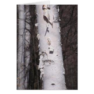 White birch (Betula papyrifera) card
