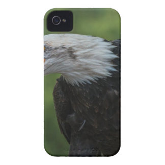 White Black Eagle during Daytime iPhone 4 Case-Mate Case