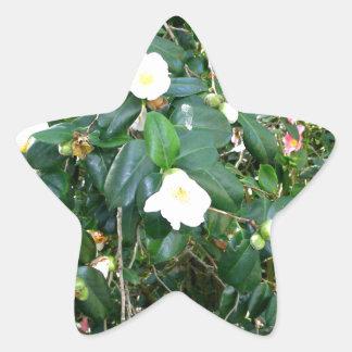 White Blooms Star Sticker