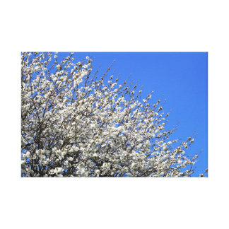 White Blossom Stretched Canvas Print