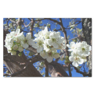 White Blossom Clusters Spring Flowering Pear Tree Tissue Paper