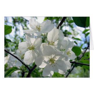 White Blossoms Card