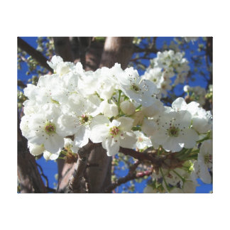 White Blossoms II Spring Flowering Tree Canvas Prints