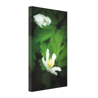 White blossoms in the darkness canvas print