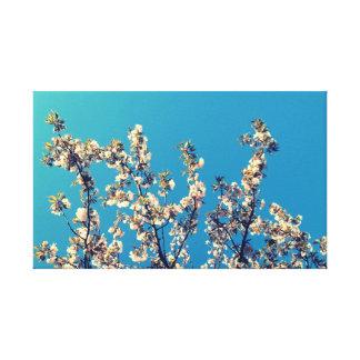 White Blossoms Under Blue Sky Canvas Prints