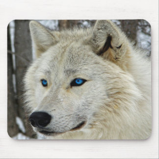 White Blue Eyed Snow Arctic Wolf Mouse Pad
