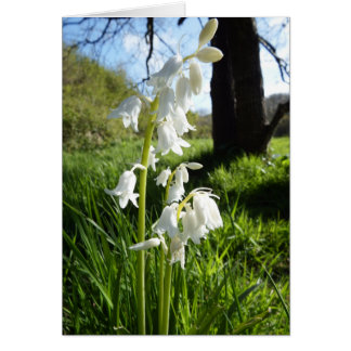 White Bluebells Blank Card