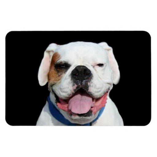 White Boxer Dog Vinyl Magnets