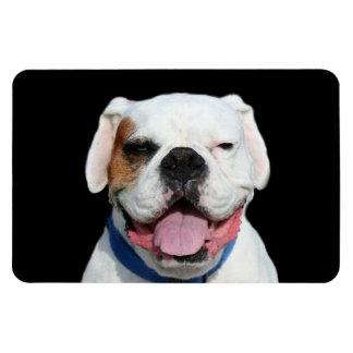 White Boxer Dog Rectangular Photo Magnet
