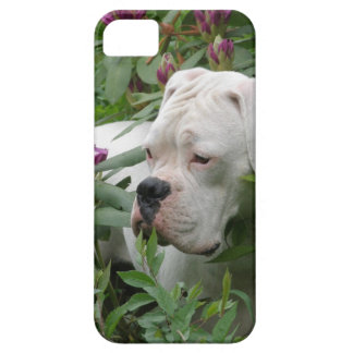 White Boxer in Pink Rhodies iPhone 5 Case