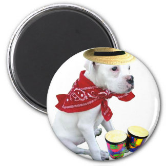 White Boxer pup with Bongos magnet