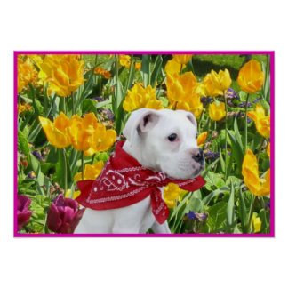 White boxer puppy in tulips poster