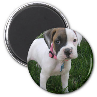 White Boxer Puppy Magnet Magnets