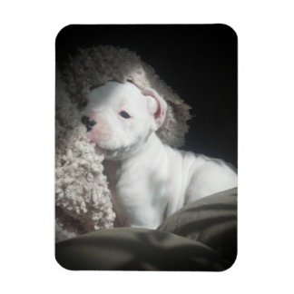 white boxer puppy magnet
