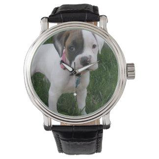 White Boxer Puppy Watch