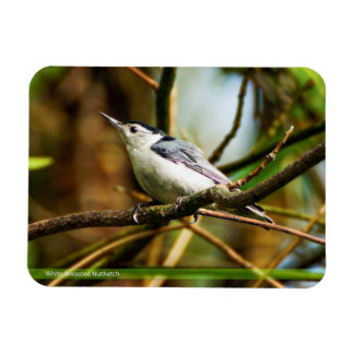 White-breasted Nuthatch Bird Magnet