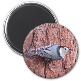 White breasted Nuthatch Bird Magnet