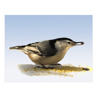 White-breasted Nuthatch Post Cards