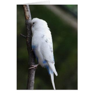 white budgie hugging tree card