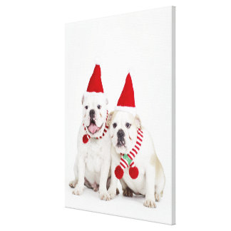 White bulldogs canvas prints