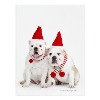 White bulldogs postcard