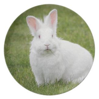 White bunny rabbit party plates