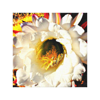White Cactus Flower Canvas