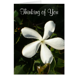 White Cali flower Thinking of You card