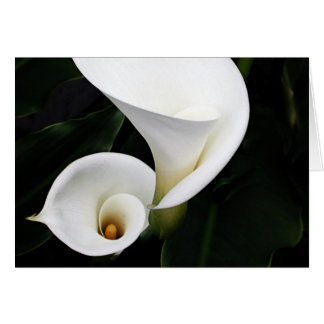 White calla Lillies Card