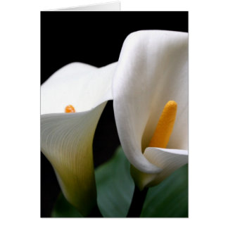 White Calla Lily Flower Greetign Card