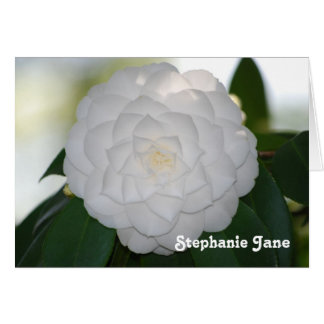 White Camellia Note Card