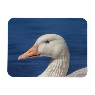 White Canadian Goose Magnet