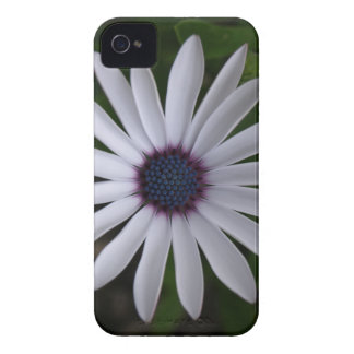 WHITE CAPE DAISY FLOWER iPhone 4 COVERS