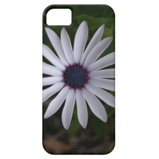 WHITE CAPE DAISY FLOWER iPhone 5 CASE