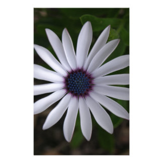 WHITE CAPE DAISY FLOWER Personalized Stationery