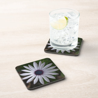 WHITE CAPE DAISY FLOWER Square Drink Coaster