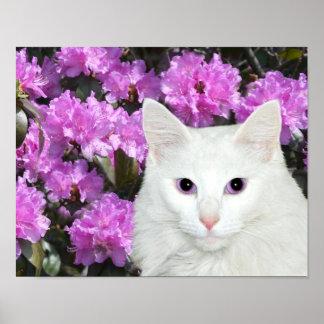 White cat azaleas poster