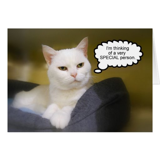 White Cat Brother Birthday Humor Card