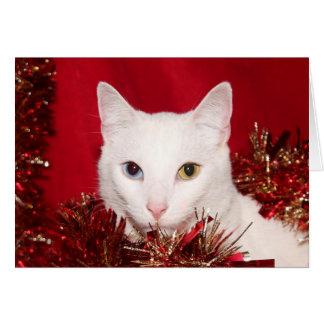 White cat Christmas Card