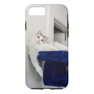 White Cat in Blue 'Nest' iPhone Case