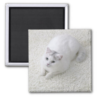 White cat looking up square magnet