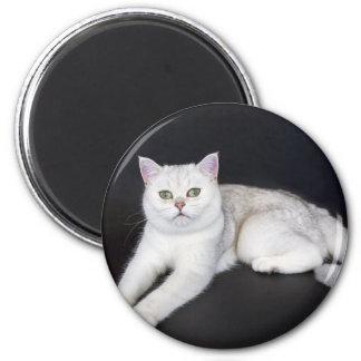 White cat lying on isolated black background 6 cm round magnet