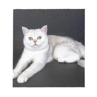 White cat lying on isolated black background notepad