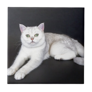 White cat lying on isolated black background small square tile
