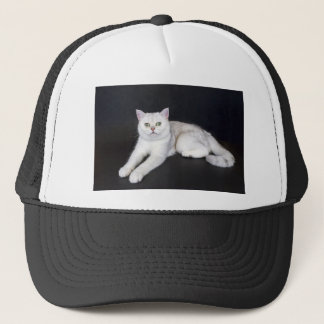 White cat lying on isolated black background trucker hat